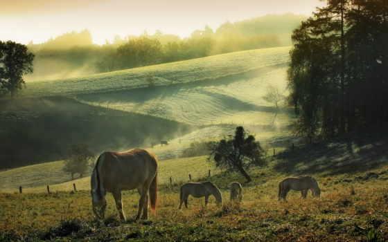 лошади, разных, пасутся, лугу,