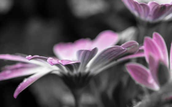 cvety, чёрно, белые, цветы, flowers, макро, лайков, дизлайков,