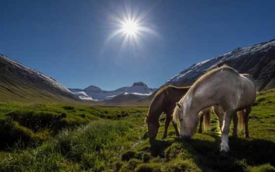 Лошади, луг, горы