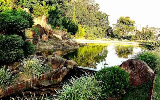 áfrica, espaço, priroda, лес, количество, красивая,