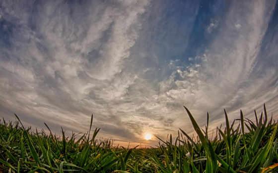 explore, пшеница, ponad