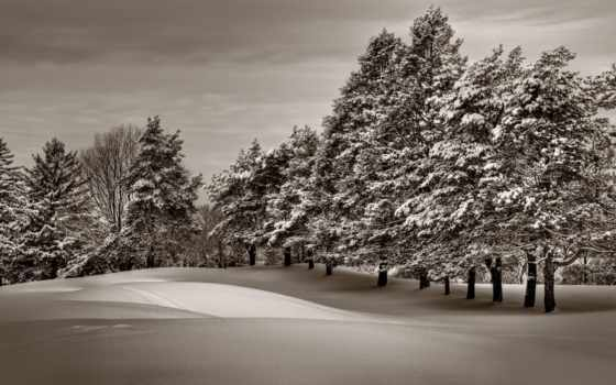 winter, снег, красивые, лес, landscape, разделе, красивая,