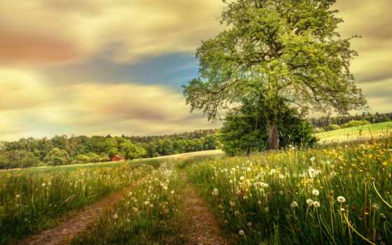 summer, поле, дорога, трава, природа, trees, одуванчики, лес, landscape, trail, дома,