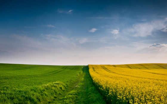 поле, margin, пшеница, колосья, осень, небо, осенние, трава, колоски, колосок, природа,