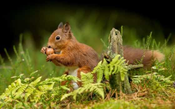 сайте, нашем, fauna, красивые, назад, природа, tapety, дней, zhivotnye, найти,