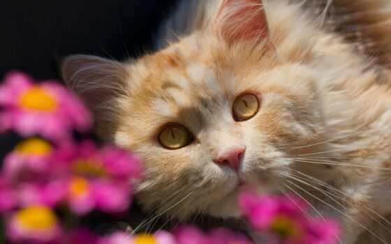 кот, cute, animal, картинка, red, котенок, funny, she