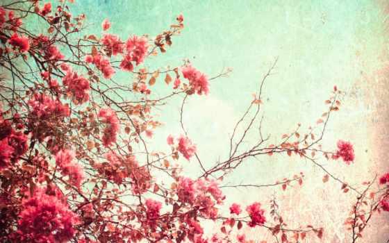 цветы, profiel, bekijken