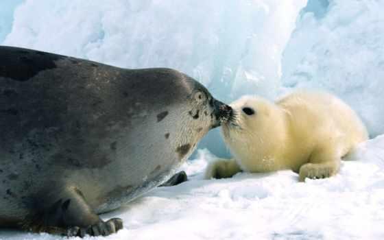 zhivotnye, морские, животных