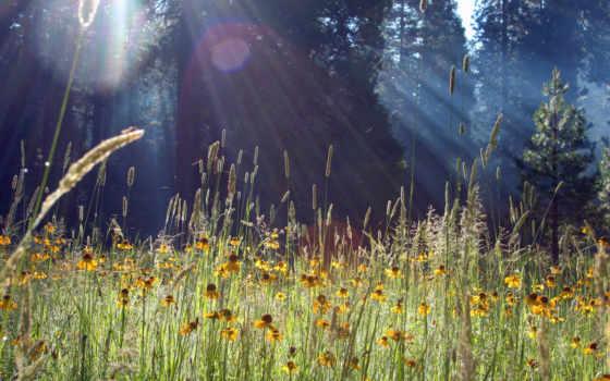 цветы, луг, трава, блики, колосья, взгляд,