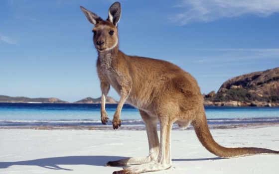 австралию, моего, are, австралия, туры, австралии, australian, группа, отдых,