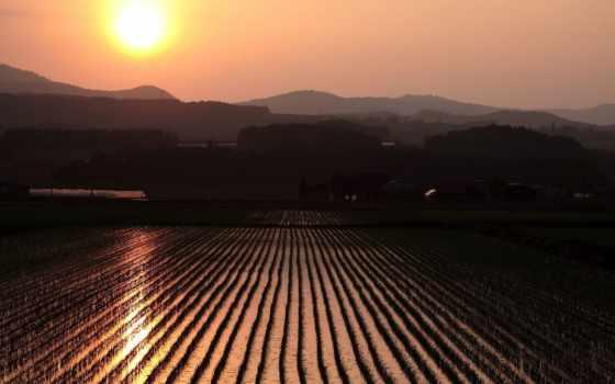 pirinç, japonya, tarlası, doğarken, чемпион, güneş, дек, au, пейзажи -, duvar,