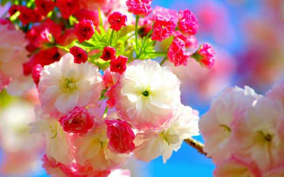 весна, cvety, красивые, цветение, мб,