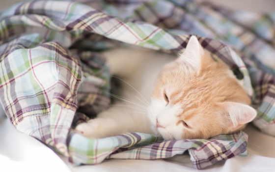 кот, torode, плед, benjamin, котенок, hannah, ложь, одеяло,