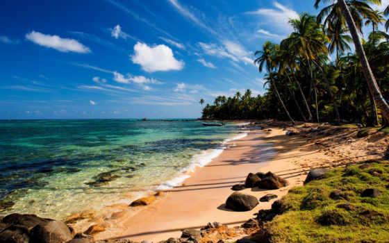пляж, пальмы, summer