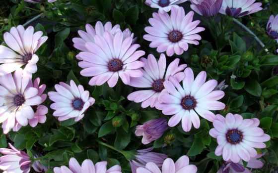 цветы, страница, flowers, регистрации, possible, ромашки, cvety, ромашка, голубая,
