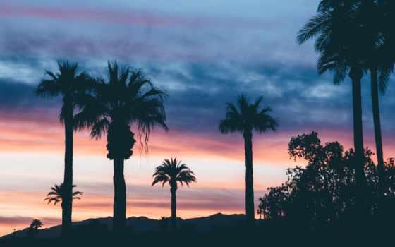 пальмы, небо, you, trees, вечер, palm, природа,