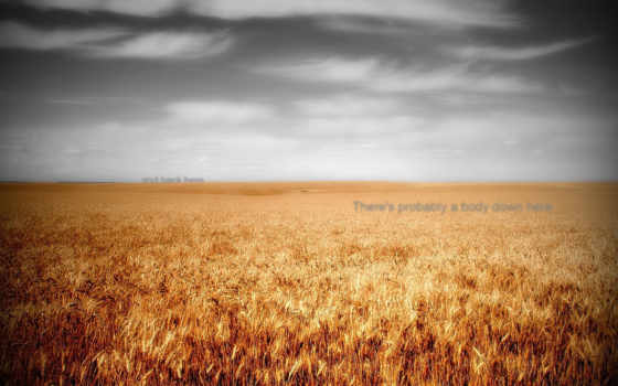 june, ipad, поле