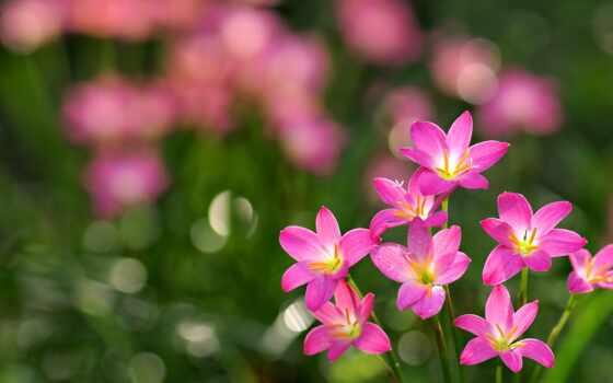 chastyi, улыбка, радость, life, цветы, красивый