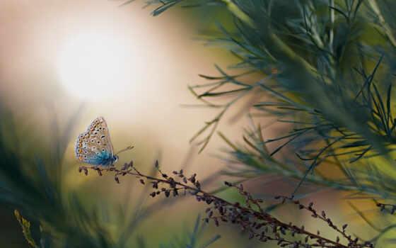 бабочка, аватар, blue, forum, corn, common, lemon, moderation, насекомое, лоли, взгляд