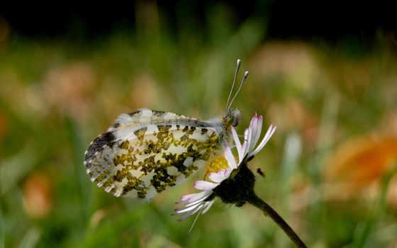 цветы, насекомые