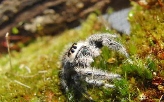 фотографий, zhivotnye, животными, количество, мб, свет, паук, широкоформатные,