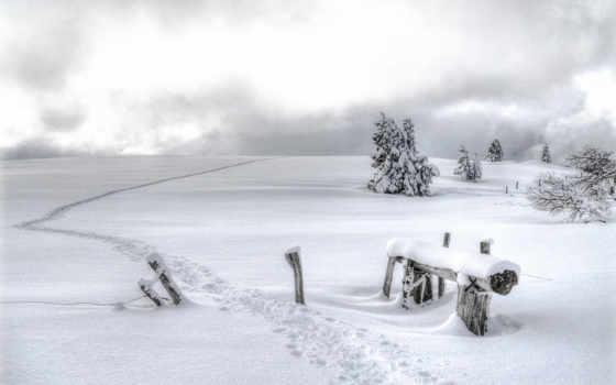 сосны, zima, снег