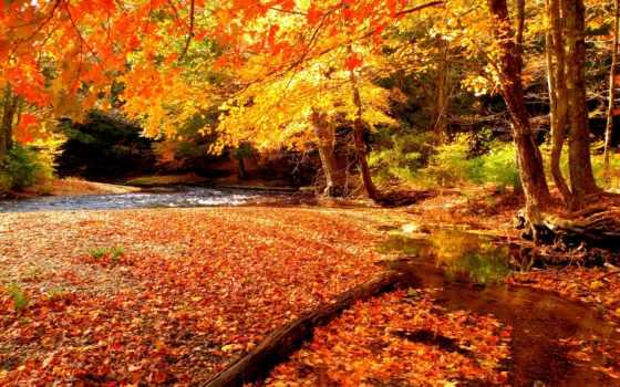 осень, надписями, страница, природа, осенние, надписью, живые, осени, красивые,