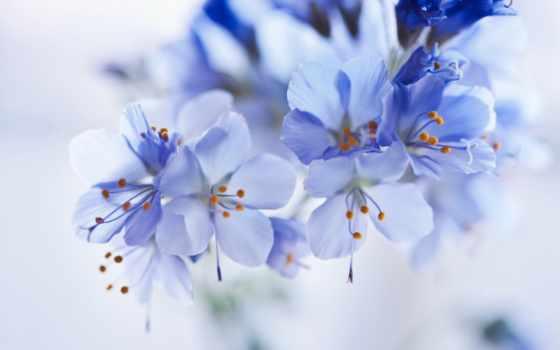 cvety, весенние, фотопанно, фотообои, фотообоев, беларуси, модульные, доставка, manufacture, sale, sfl,