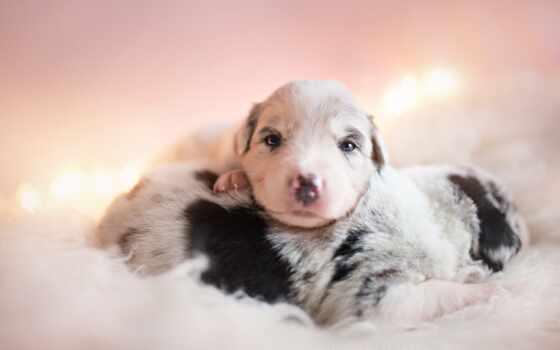 собака, animal, baby, щенок, pet