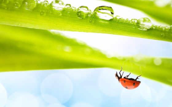 божья, коровка, насекомое, вода, макро, трава, изображения, hanging, just, воздух, spring, воздуха, листике, компьютера, от, полном,