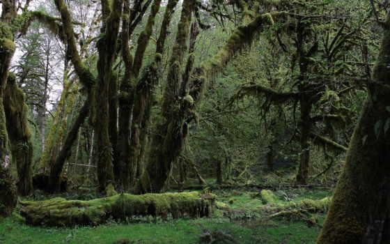 rezreshenie, зелёный, природа