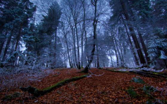 лес, времена, года, осень, деревя, природа, листья, winter,
