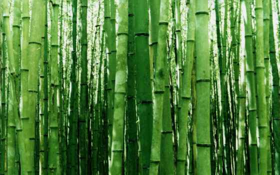 бамбук, дерево, pinterest
