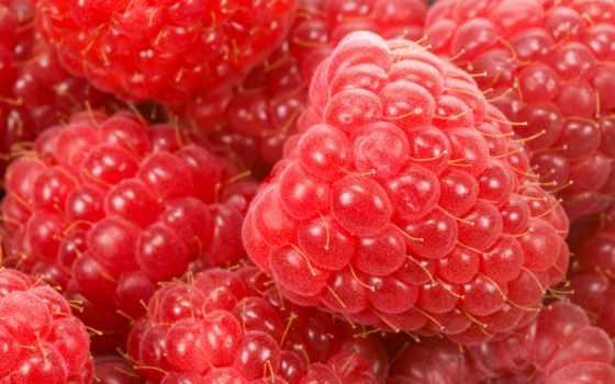 малина, ягода, summer