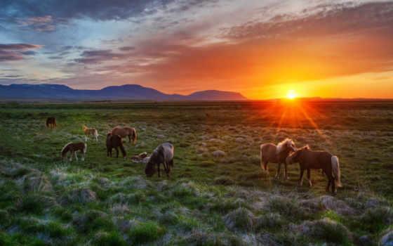 лошади, рассвете, дикие, лошадях, лошадей, лошадь, fone,