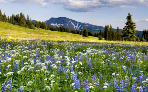 луг, cvety, цветов, красавица, youtube, природы, полевые, stress, релакс, продолжительность, summer,