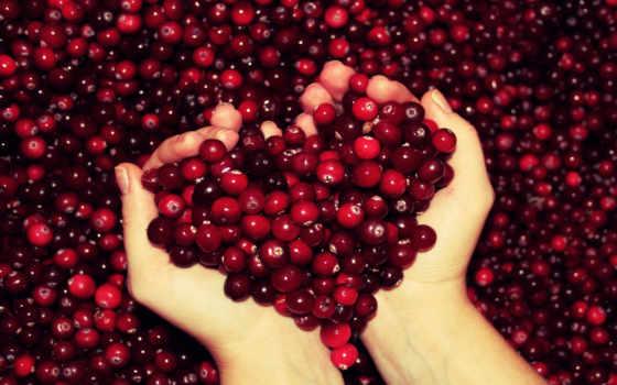 вишни, cherry, cerezas, красивые, экскурсии, клюква, photogallery, красиво,