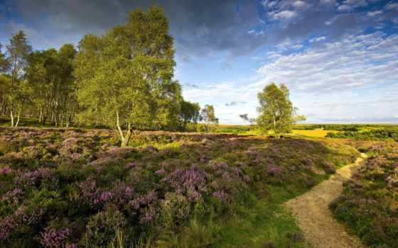 пейзажи -, summer, cvety, яndex, megapixel, more, луга, card, лес, favourite,