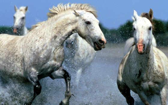 horses, лошади