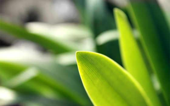 трава, газон, категория
