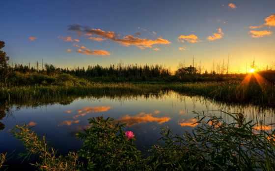 закат, осень, пруд, лес, вечер, красивые, шиповник, трава, цветы, sun,