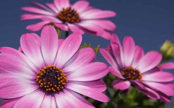 hoa, hành, dài, cực, những, xem, miễn, nın,
