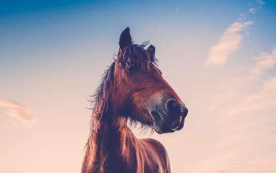 лошадь, глаза, red, desktop, running, wild, photos,