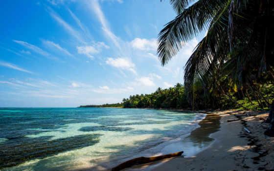 tropics, пальмы, песок, branch, море, пляж, фото,