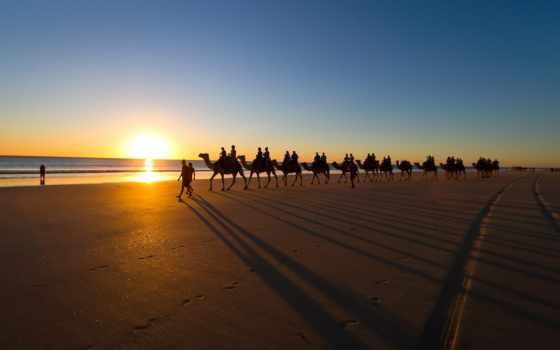 верблюды, caravan, верблюдов, пустыне, животных, зооклубе, картинка, зооклуб, фото, пустыня, пляж,