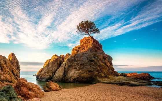 rock, море, дерево, water, природа, ray, рассвет, tub
