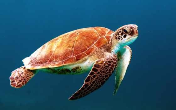 черепаха, marine, когда, средний, злой, pour, череп, приложение, ocean, priplyt