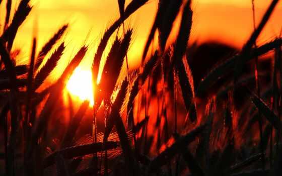 twitter, друг, gratis, grassland, уважаемый, public, pixabay, claire, закат