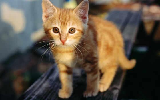 кошки, животные, бревнышку, котята,