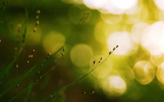 трава, природа, совершенно